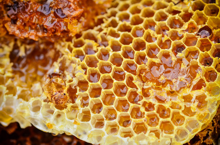 close up Pieces of Honeycomb with honey