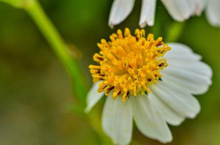 close up grass flower in field