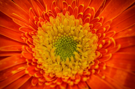 Beautiful pollen flower blossom Stock Photo