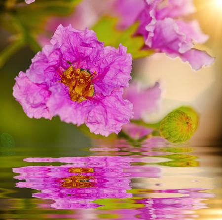 Beautiful inthanin flower with reflect