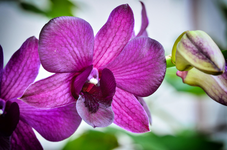 Beautiful violet orcid blooming in nature Stock Photo