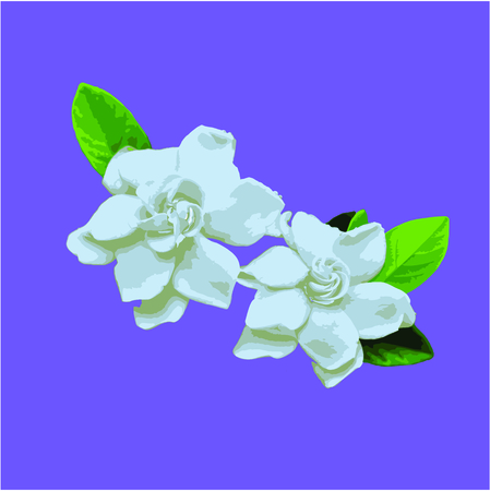 Beautiful gardenia on violet background