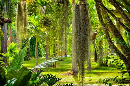 Beautiful fern plant in garden