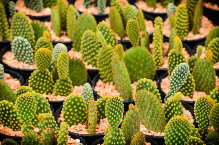 Cactus in plastic pot at garden Stock Photo