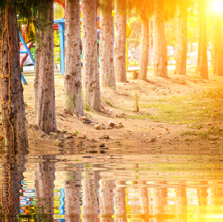 Line pine trees near porn with reflect Stock Photo