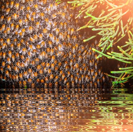 bee hive with honeycomb near water reflection