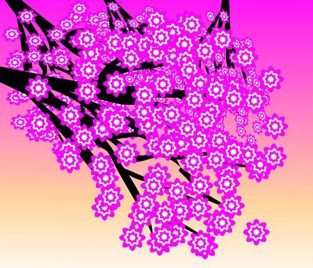 Beautiful Cherry Blossom Tree Under Pink Sky