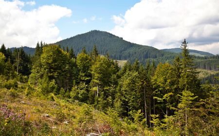 Summer mountain and forest in Carpathian