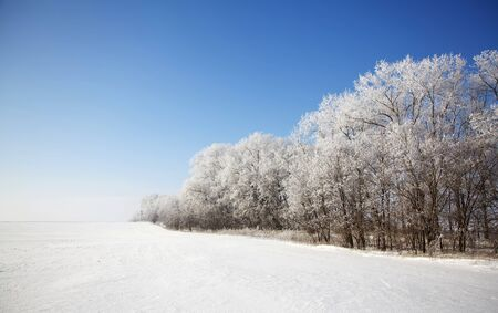 Beautiful winter landscape with meadow and forest