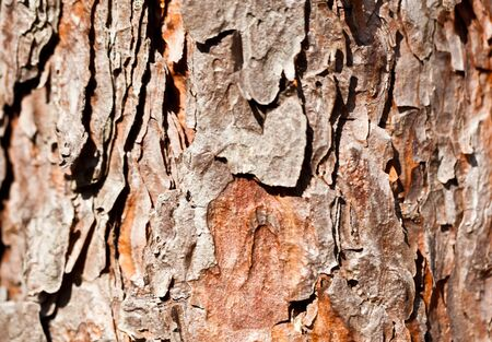 Brown tree bark close view