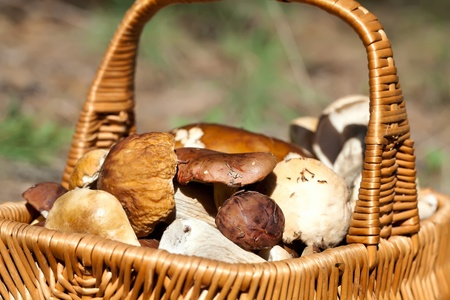 Basket with different autumn mushrooms photo