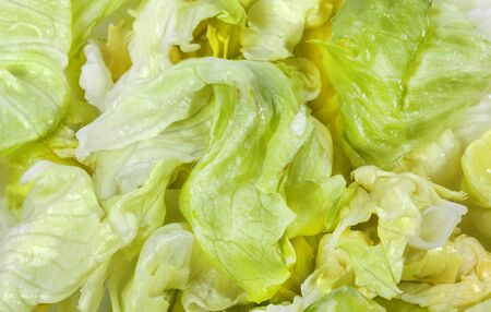 Iceberg lettuce fresh green salad close view Stock Photo