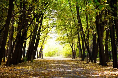 Autumnal pathway in forest