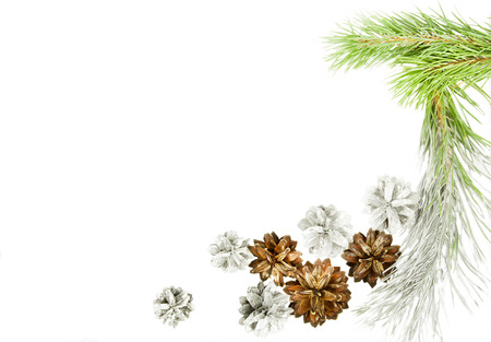 Green spruce twig with cones isolated on white Stock Photo