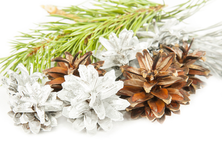 Fir tree branch and silver with brown cones isolated on white background