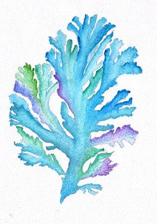 Sea coral watercolor drawing painting