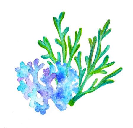 Two sea corals watercolor drawing Stok Fotoğraf