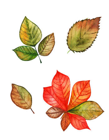 Different autumn leaves watercolor set on white background isolated