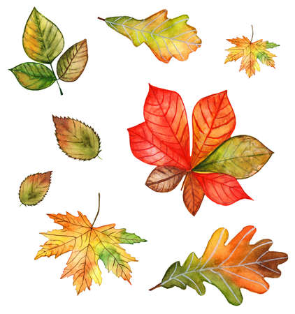 Autumn leaves watercolor illustration set on white background