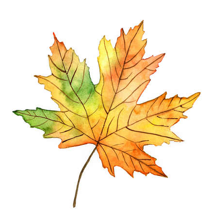 Autumn leaf watercolor illustration on white background isolated