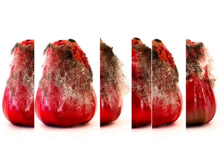 sporen: Close up Schuss von Pilz Sporen wachsen auf Obst. Lizenzfreie Bilder
