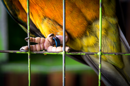 Close up bird legs in the cage, No freedom,Wildlife Trade