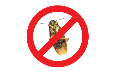 cross legs: No More Cockroach icon ,Sign and dead of a cockroach,Isolated on a white background