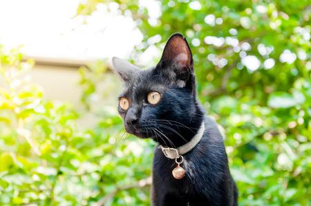 A black cat in community Black cat in autumn leaves close up photo , Animal portrait Black kitten