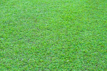 Football field green grass pattern textured background , textured grass for background