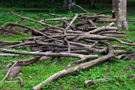 Pile of firewood outdoors,Landscape with old dead woods in deep forest