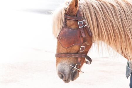 Beautiful brown horse,domesticated animal used by humans as transportation. Summer day Stock Photo