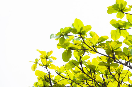 suburban neighborhood: green leaf leaves budding in the spring for background,In the spring natural background , eco concept