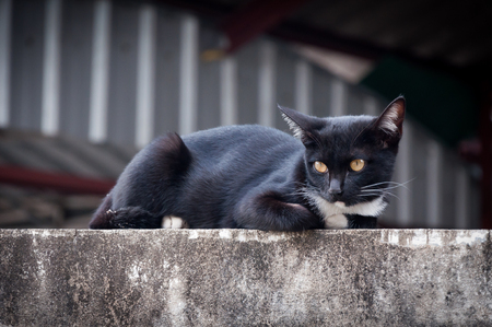groomed: Young cat of a black color on fence ,Animal portrait Black kitten