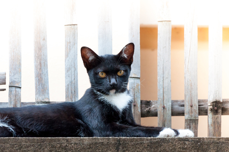 cat grooming: Young cat of a black color on fence ,Animal portrait Black kitten