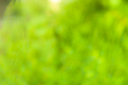 Sunny abstract green nature summer background, selective focus Stock Photo