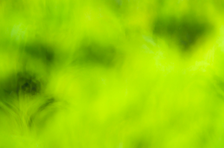 Sunny abstract green nature summer background, selective focus Imagens