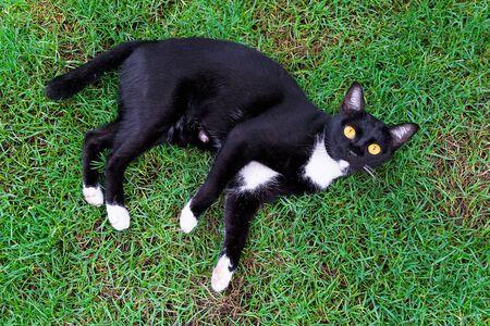 Cute black cat lying on green grass lawn,top view Stock fotó