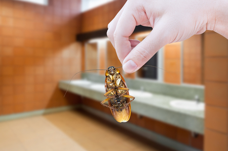 eliminate: Hand holding cockroach on toilet background, eliminate cockroach in toilet