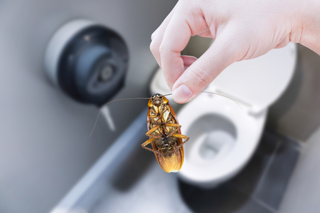 revolting: Hand holding cockroach on toilet background, eliminate cockroach in toilet