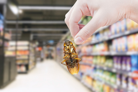 Hand holding cockroach in the supermarket,eliminate cockroach in shopping mall Foto de archivo