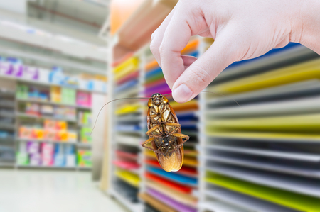 Hand holding cockroach in the supermarket,eliminate cockroach in shopping mall Stock Photo