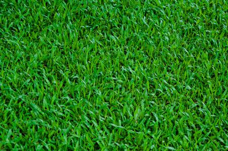 Football field green grass pattern texture background,texture grass for background