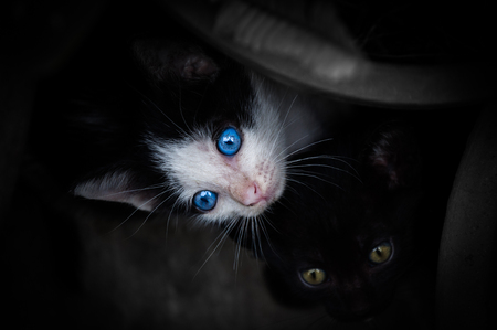 kitten with beautiful blue eyes,Animal portrait,playful cat relaxing vacation Stock Photo