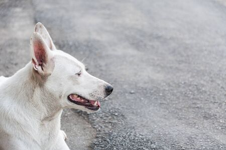 Portrait of white cute dog lying on the ground Stock fotó