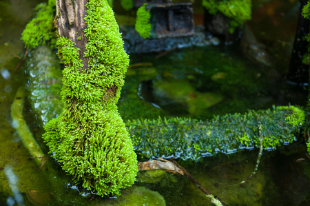 Closed up green moss in tropical forest Imagens