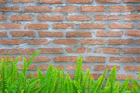 Green fern and moss on brick wall for texture background 免版税图像