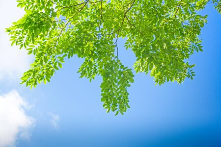 Green leaves on blue sky background Stockfoto