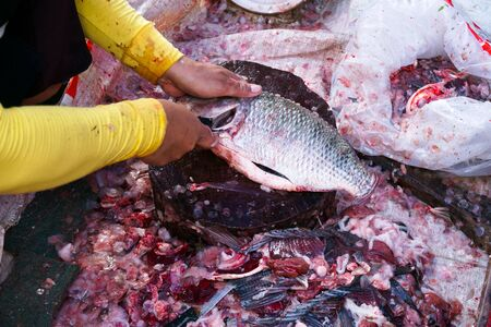Cleans dissected a freshly raw tilapia fish with a knife in the market for cooking and sale in market Stock fotó