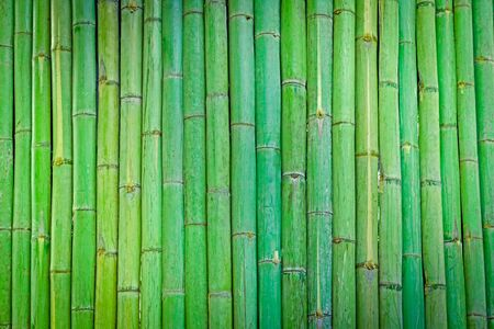 Green Bamboo fence background,Bamboo wood texture for background Stock Photo