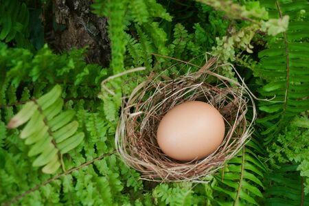 A nest with one egg on green plants in the forest